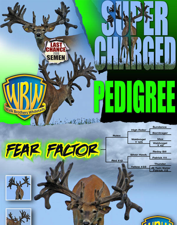 Walk Brother Whitetails - Fear Factor